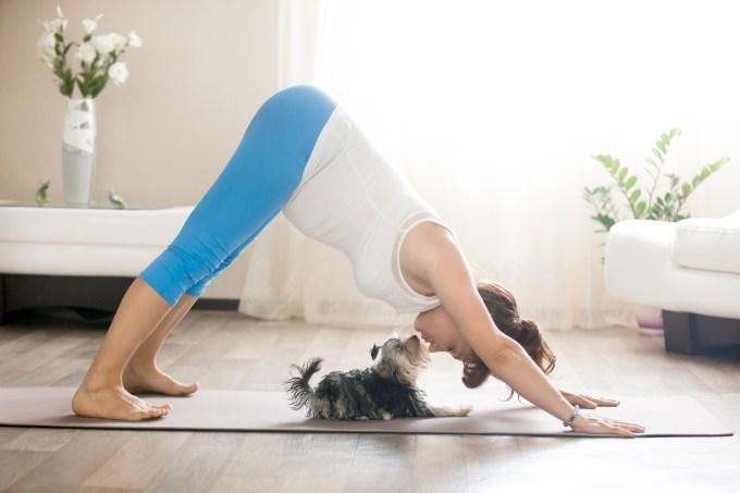 Benefícios para a saúde em ter um pet em casa