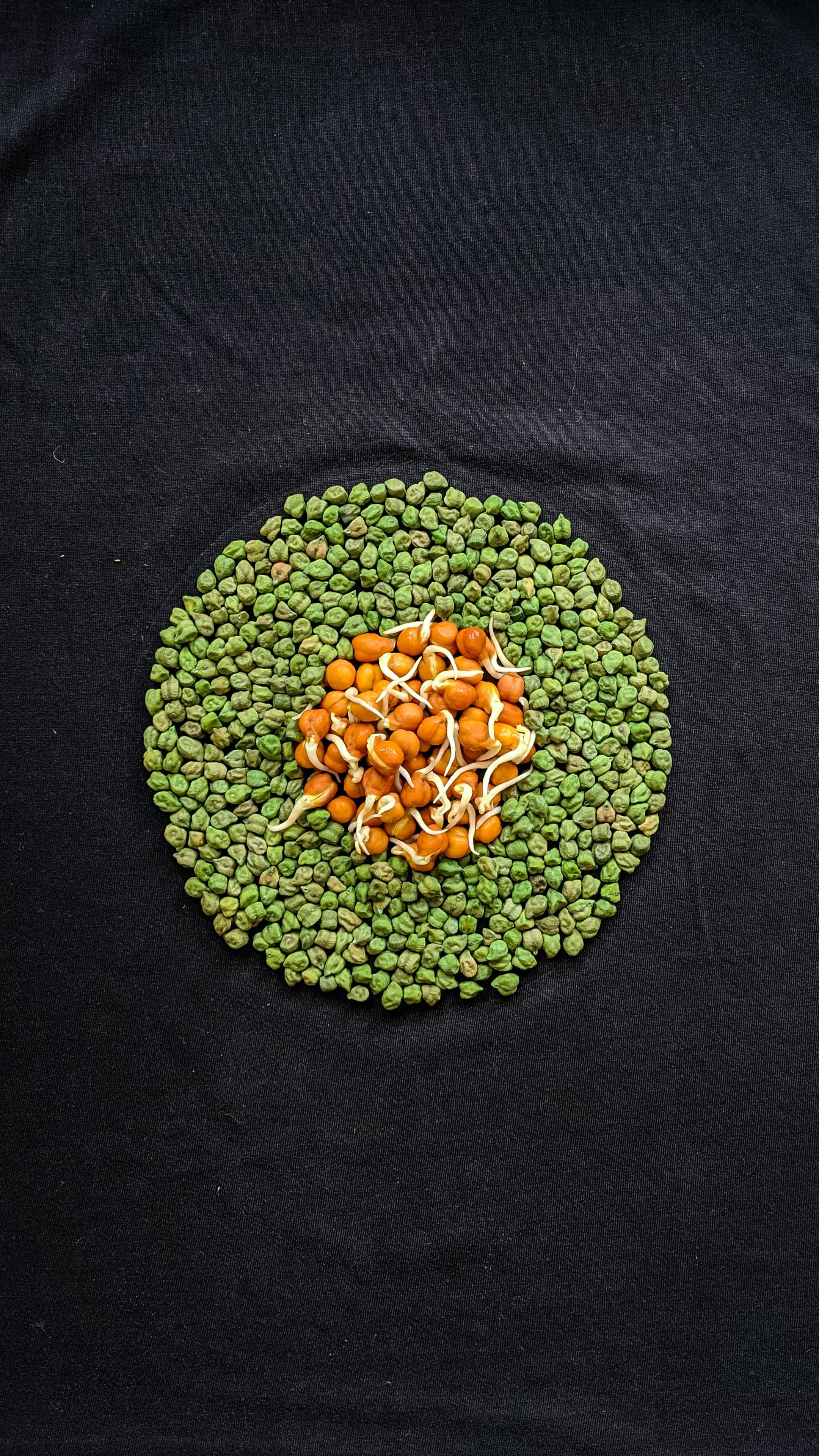 receita de lentilha com atum