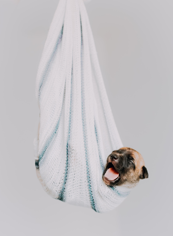 cachorrinho dormindo em rede